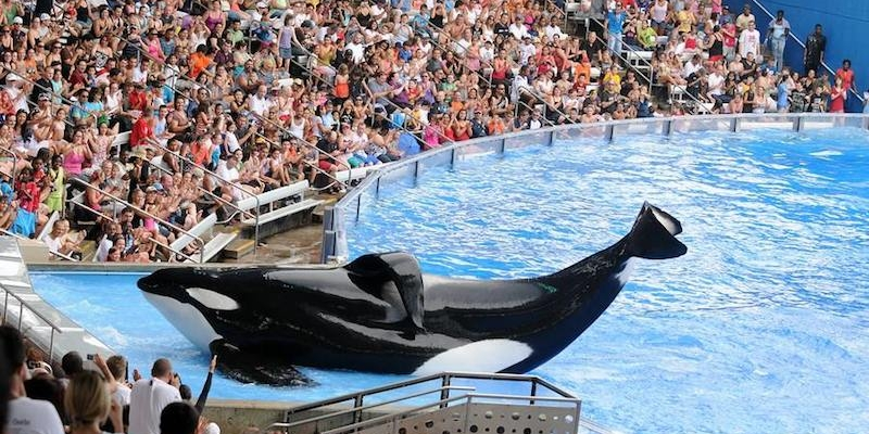The Blackfish Documentary: A Look at SeaWorld Corruption - Strong ...